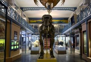 Sala dos Dinossauros